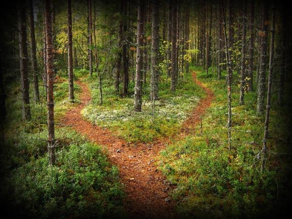 лесные тропинки пересекаются