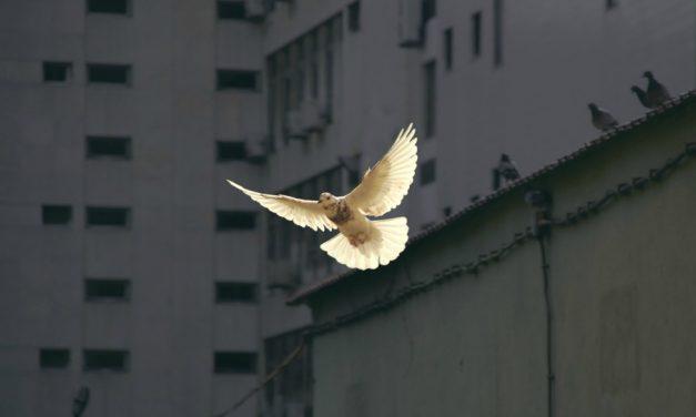 ЧТО МЫ ИМЕЕМ В ВИДУ, КОГДА ГОВОРИМ «Я ЧУВСТВУЮ ДУХ»?